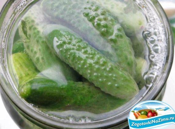 Как засолить корнишоны на зиму пошаговый рецепт