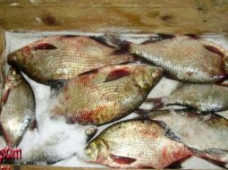 recept-zasolki-ryby-v-domashnih-uslovijah_1.jpg