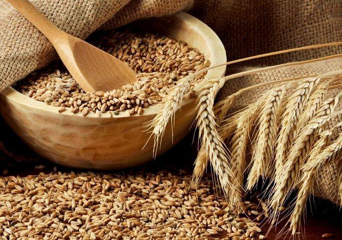 Рецепт приготовления самогона в домашних условиях из пшеницы