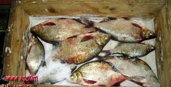 Рецепт засолки рыбы в домашних условиях