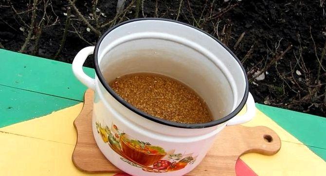 Самогон на пшенице без дрожжей рецепт видео
